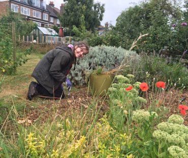 summer scheme gardener